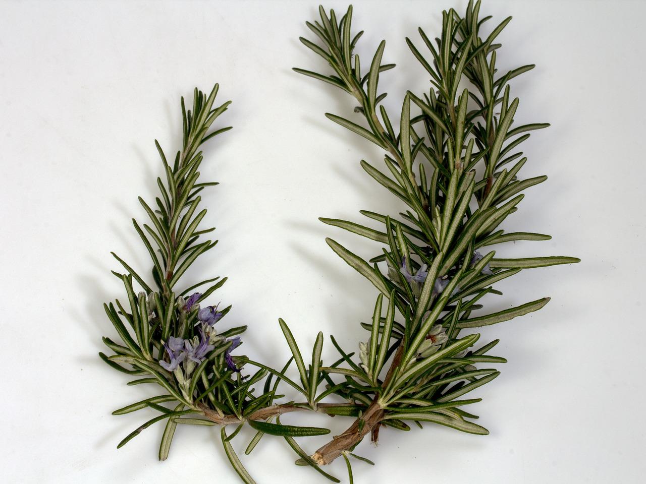 Rozmarín sa vkuchyni sa so svojou výraznou vôňou kombinuje sozeleninou alebo sa pridáva do džemov.