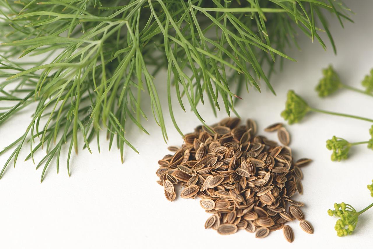 Okremkulinárskeho použitia majú semená kôpru ajupokojujúce účinky apodporujú trávenie.